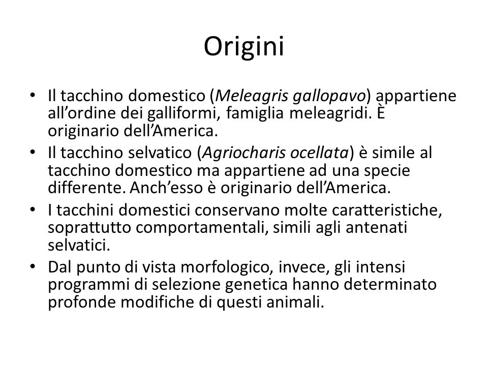 Origini Il tacchino domestico (Meleagris gallopavo) appartiene allordine dei galliformi, famiglia meleagridi. È originario dellAmerica. Il tacchino se