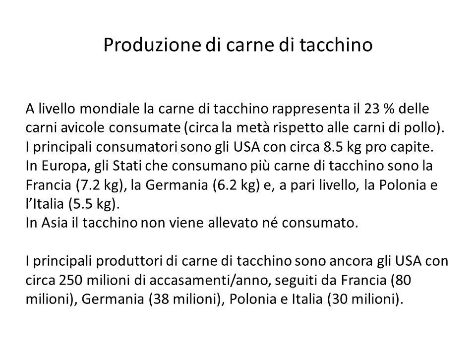 Produzione di carne di tacchino A livello mondiale la carne di tacchino rappresenta il 23 % delle carni avicole consumate (circa la metà rispetto alle