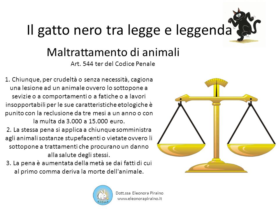 Il gatto nero tra legge e leggenda 1.