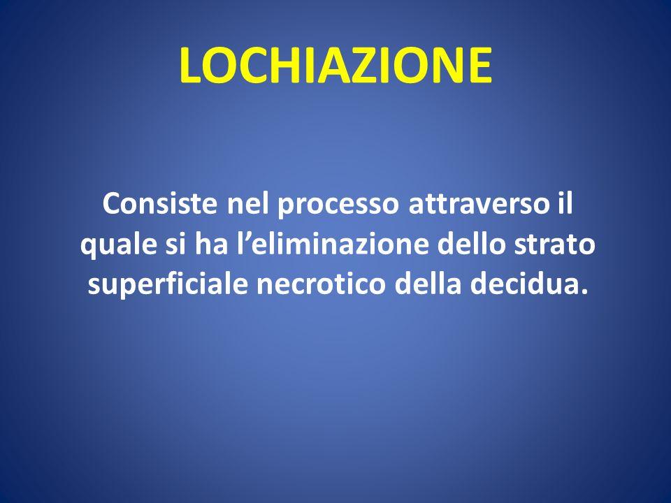 LOCHIAZIONE Consiste nel processo attraverso il quale si ha leliminazione dello strato superficiale necrotico della decidua.