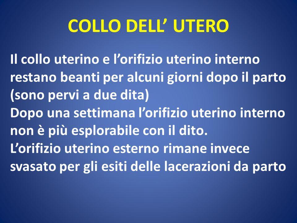 COLLO DELL UTERO Il collo uterino e lorifizio uterino interno restano beanti per alcuni giorni dopo il parto (sono pervi a due dita) Dopo una settiman