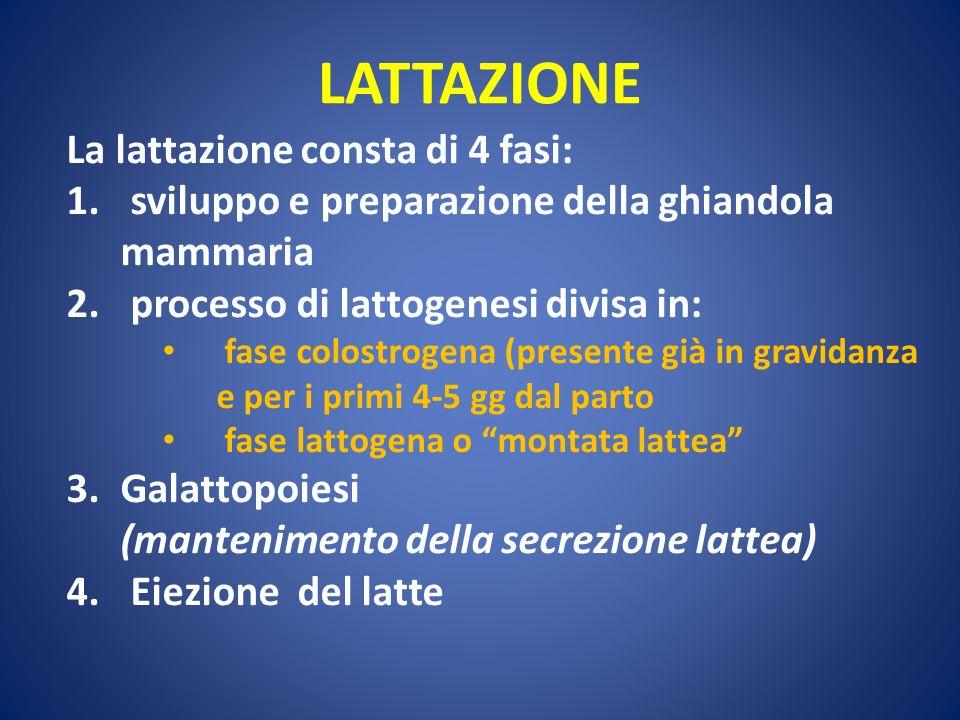 LATTAZIONE La lattazione consta di 4 fasi: 1. sviluppo e preparazione della ghiandola mammaria 2. processo di lattogenesi divisa in: fase colostrogena