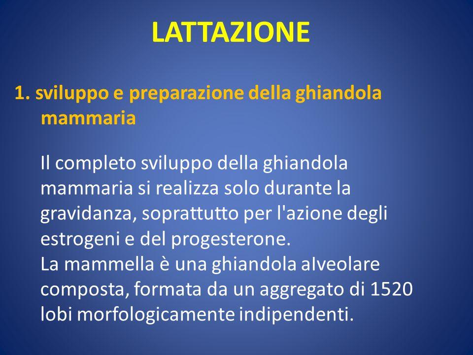 LATTAZIONE 1. sviluppo e preparazione della ghiandola mammaria Il completo sviluppo della ghiandola mammaria si realizza solo durante la gravidanza, s