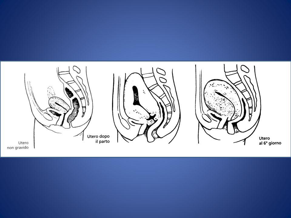 LATTAZIONE Fase colostrogena Inizia già nei primi mesi di gravidanza e dura 4-5 gg dopo il parto.