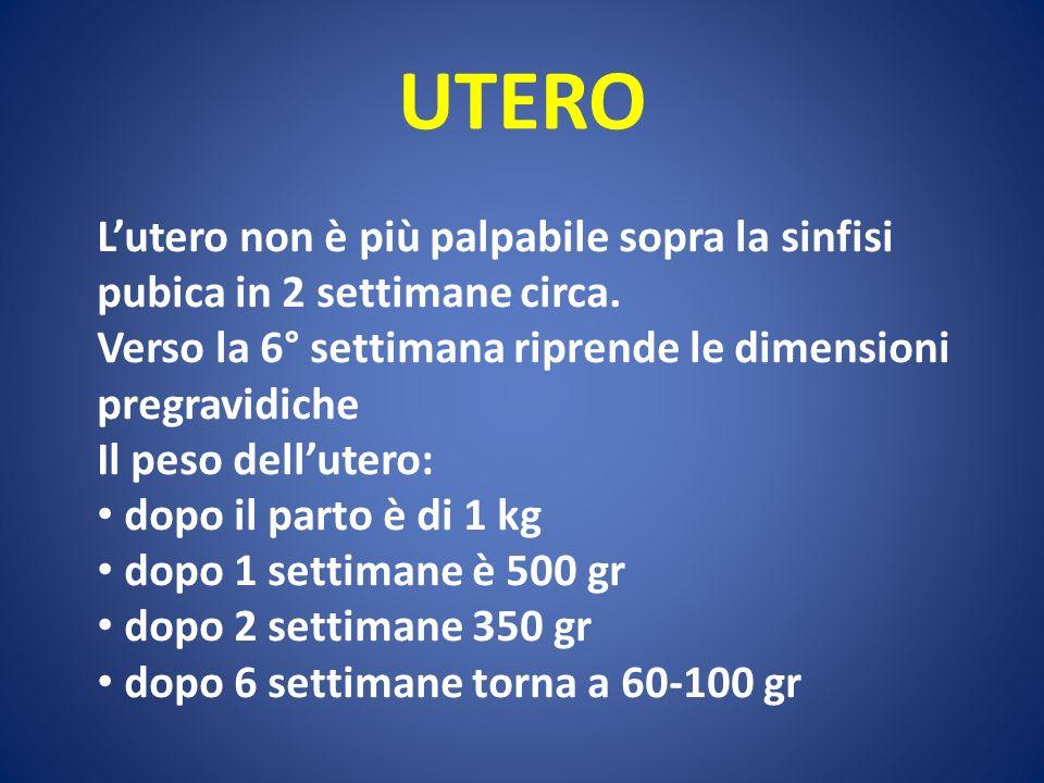 UTERO Lutero non è più palpabile sopra la sinfisi pubica in 2 settimane circa. Verso la 6° settimana riprende le dimensioni pregravidiche Il peso dell