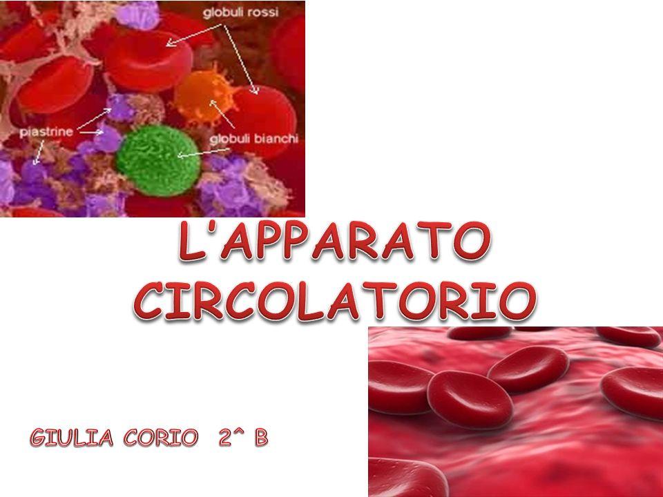 Il sangue è un tessuto fluido che circola continuamente nellorganismo trasportando a tutte le cellule sostanze nutritive e ossigeno.