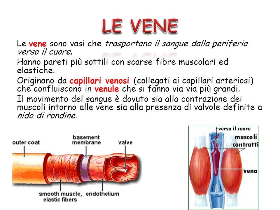 Le vene sono vasi che trasportano il sangue dalla periferia verso il cuore. Hanno pareti più sottili con scarse fibre muscolari ed elastiche. Originan