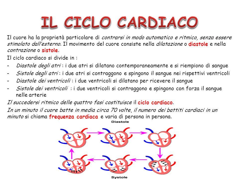 Il cuore ha la proprietà particolare di contrarsi in modo automatico e ritmico, senza essere stimolato dallesterno. Il movimento del cuore consiste ne