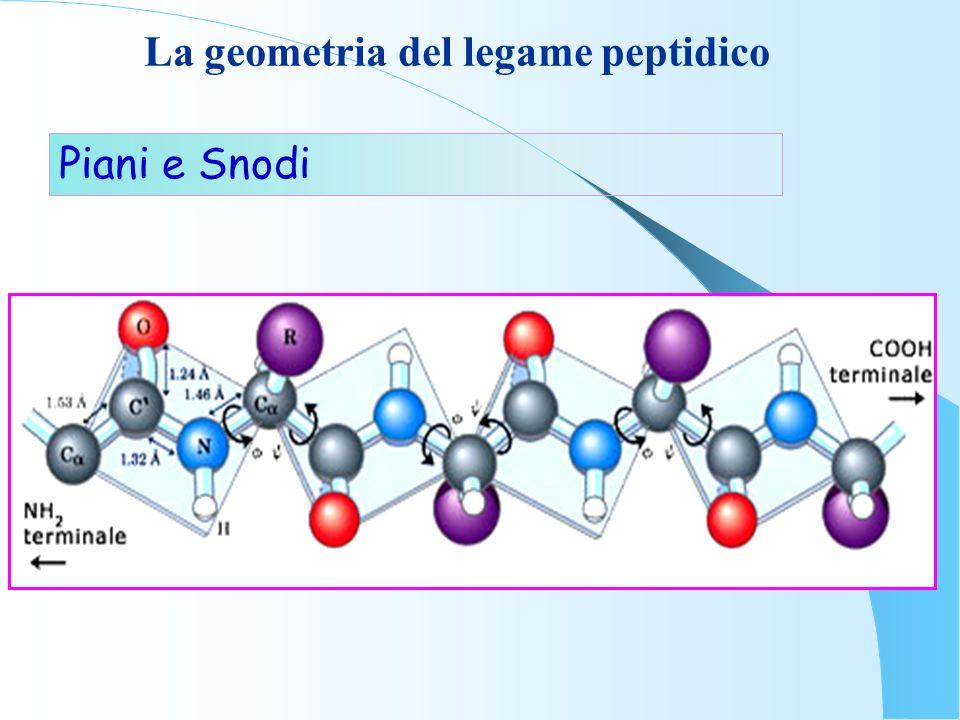 La geometria del legame peptidico Piani e Snodi