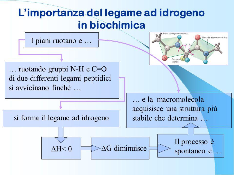 Limportanza del legame ad idrogeno in biochimica I piani ruotano e … … ruotando gruppi N-H e C=O di due differenti legami peptidici si avvicinano finc