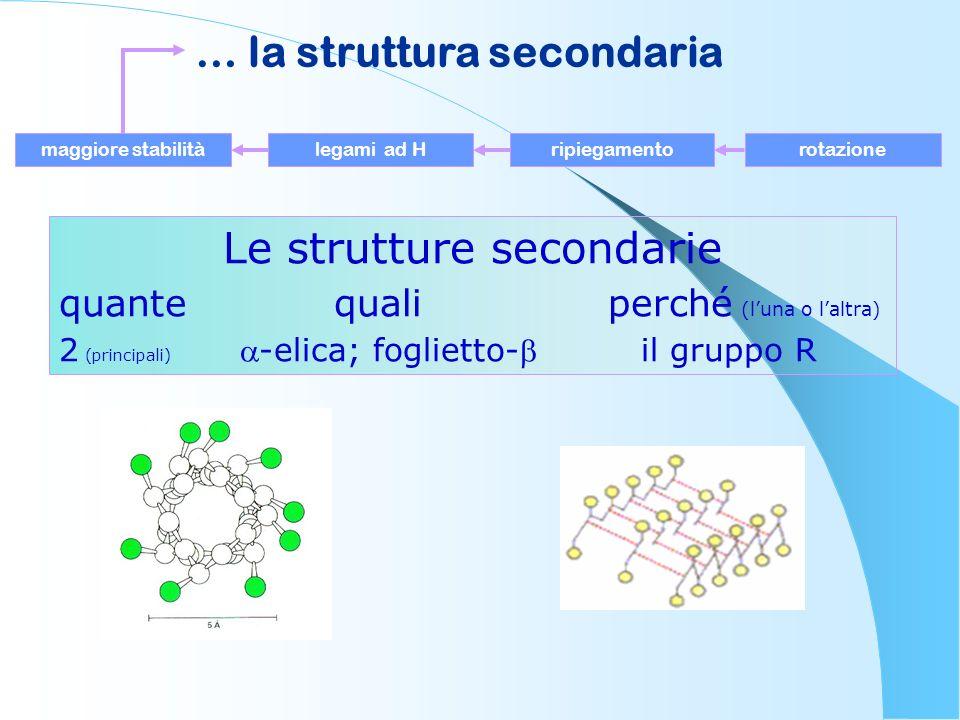 … la struttura secondaria maggiore stabilitàlegami ad Hripiegamentorotazione Le strutture secondarie quante quali perché (luna o laltra) 2 (principali
