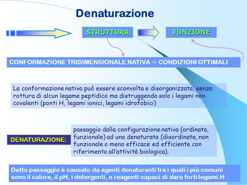 Denaturazione STRUTTURAFUNZIONE CONFORMAZIONE TRIDIMENSIONALE NATIVA CONDIZIONI OTTIMALI La conformazione nativa può essere sconvolta e disorganizzata