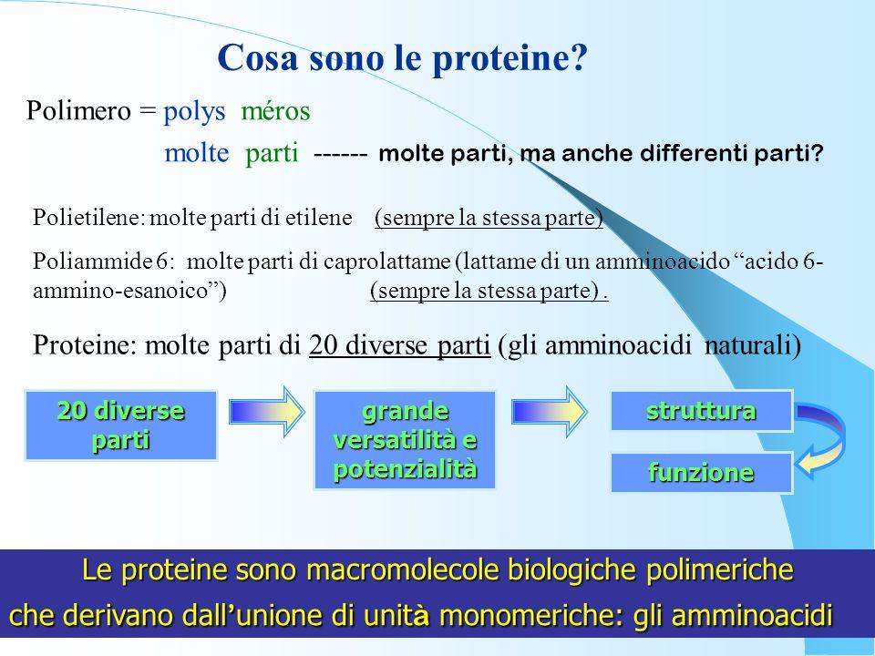 Le proteine sono macromolecole biologiche polimeriche Cosa sono le proteine? Polimero = polys méros molte parti ------ molte parti, ma anche different