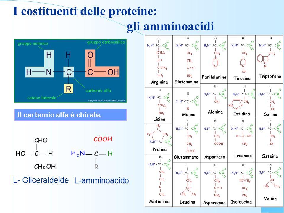 I costituenti delle proteine: gli amminoacidi L- Gliceraldeide L-amminoacido Il carbonio alfa è chirale.