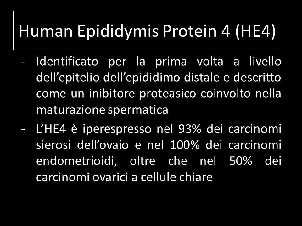 Human Epididymis Protein 4 (HE4) -Identificato per la prima volta a livello dellepitelio dellepididimo distale e descritto come un inibitore proteasic