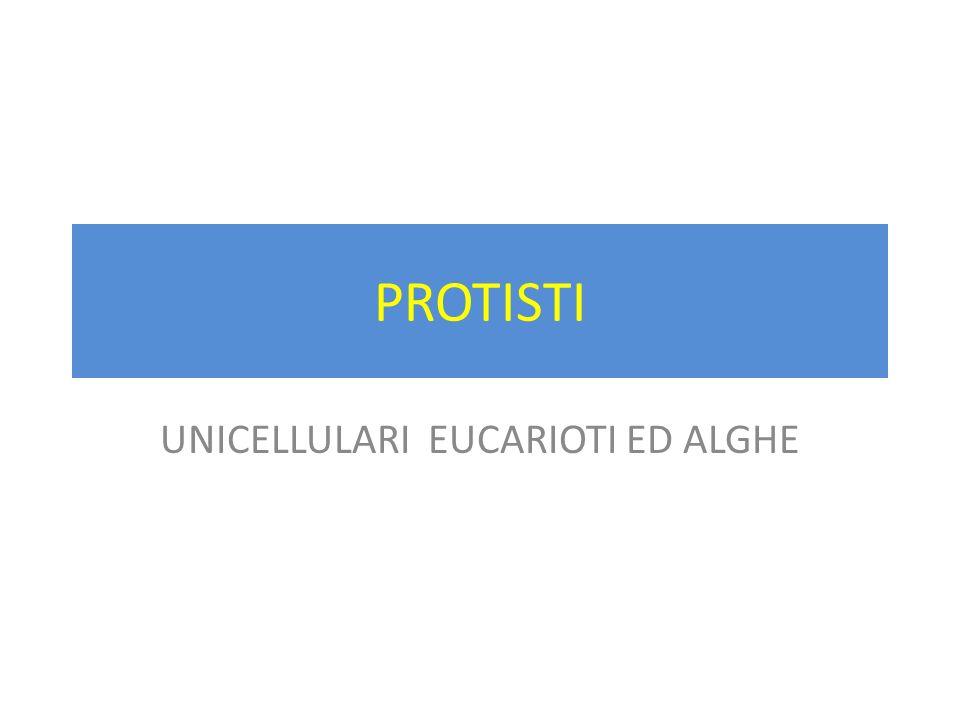 PROTISTI UNICELLULARI EUCARIOTI ED ALGHE