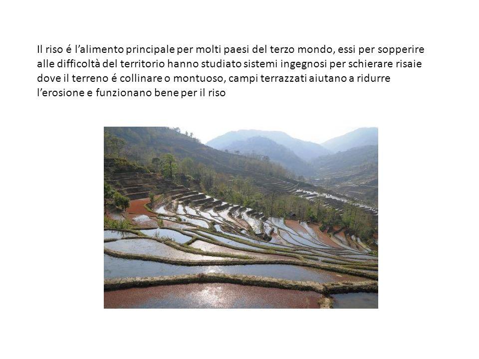 Il riso é lalimento principale per molti paesi del terzo mondo, essi per sopperire alle difficoltà del territorio hanno studiato sistemi ingegnosi per