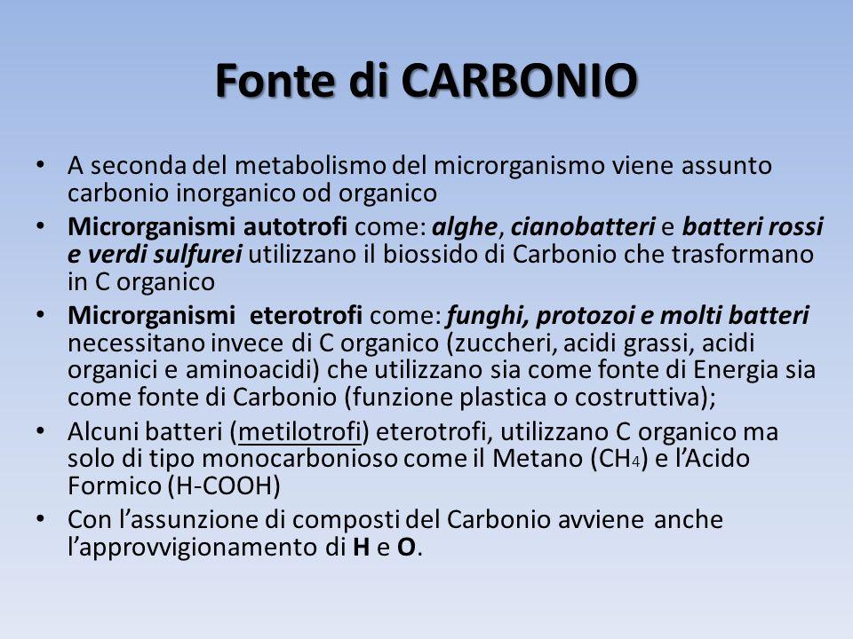 Fonte di CARBONIO A seconda del metabolismo del microrganismo viene assunto carbonio inorganico od organico Microrganismi autotrofi come: alghe, ciano
