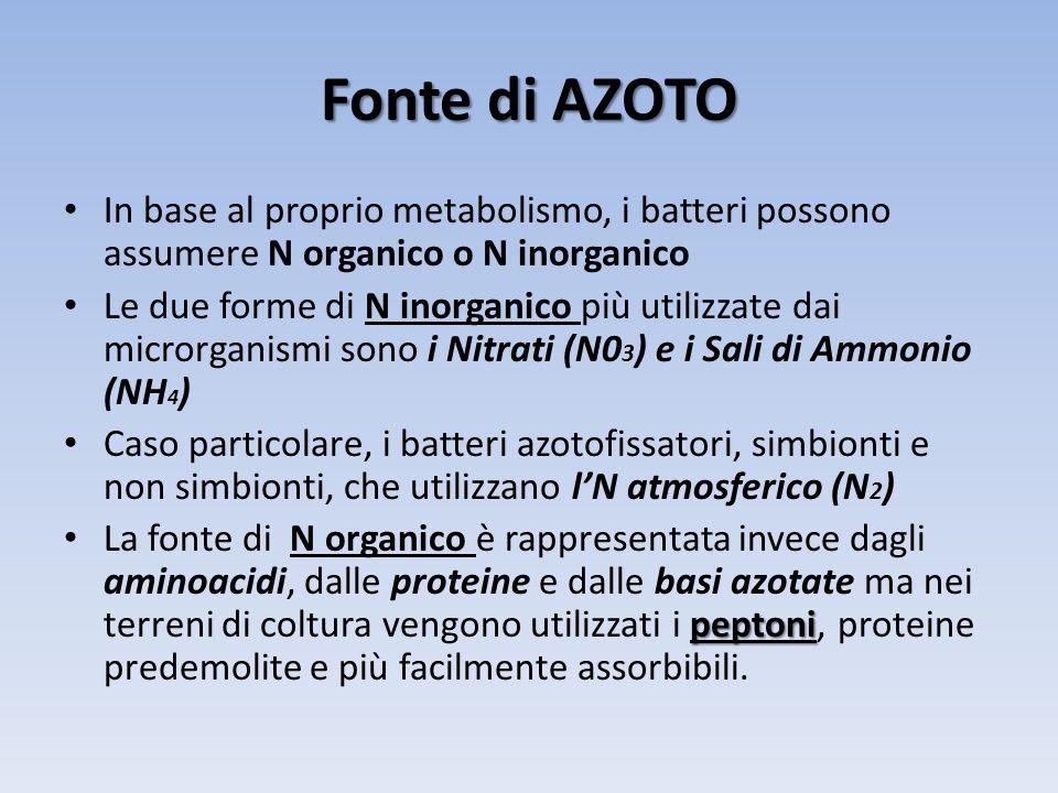 Fonte di AZOTO In base al proprio metabolismo, i batteri possono assumere N organico o N inorganico Le due forme di N inorganico più utilizzate dai mi