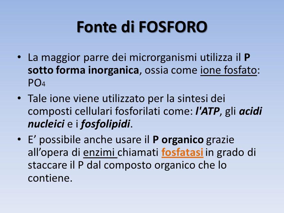 Fonte di FOSFORO La maggior parre dei microrganismi utilizza il P sotto forma inorganica, ossia come ione fosfato: PO 4 Tale ione viene utilizzato per