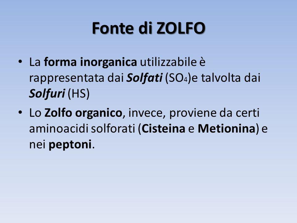 Fonte di ZOLFO La forma inorganica utilizzabile è rappresentata dai Solfati (SO 4 )e talvolta dai Solfuri (HS) Lo Zolfo organico, invece, proviene da