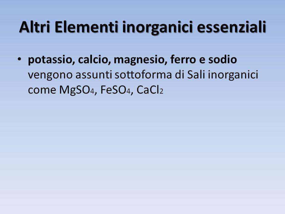 Altri Elementi inorganici essenziali potassio, calcio, magnesio, ferro e sodio vengono assunti sottoforma di Sali inorganici come MgSO 4, FeSO 4, CaCl