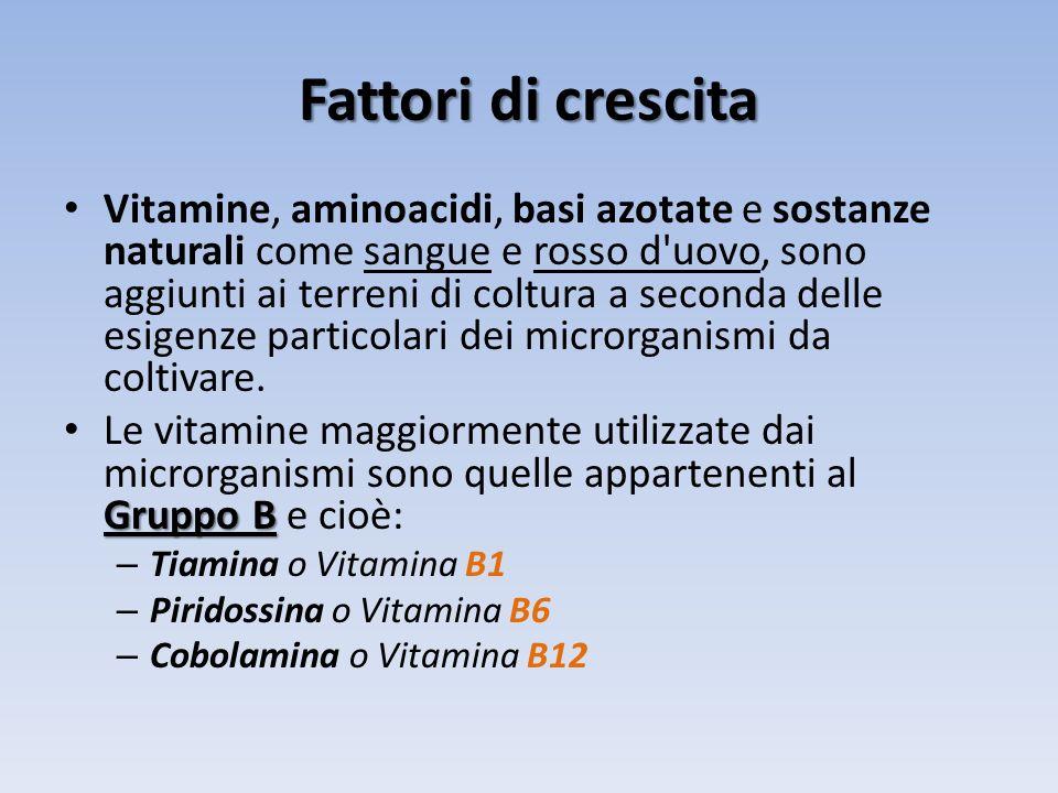 Fattori di crescita Vitamine, aminoacidi, basi azotate e sostanze naturali come sangue e rosso d'uovo, sono aggiunti ai terreni di coltura a seconda d