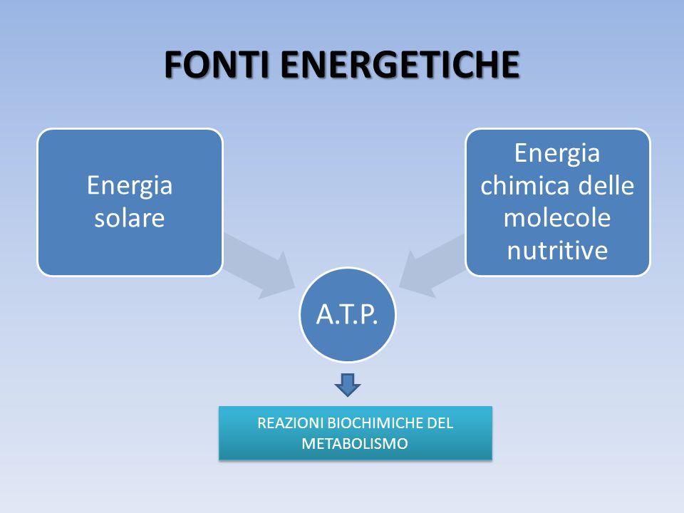 FONTI ENERGETICHE A.T.P. Energia solare Energia chimica delle molecole nutritive REAZIONI BIOCHIMICHE DEL METABOLISMO