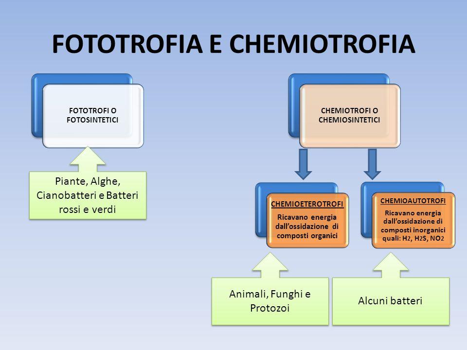 FOTOTROFIA E CHEMIOTROFIA FOTOTROFI O FOTOSINTETICI CHEMIOTROFI O CHEMIOSINTETICI CHEMIOETEROTROFI Ricavano energia dallossidazione di composti organi