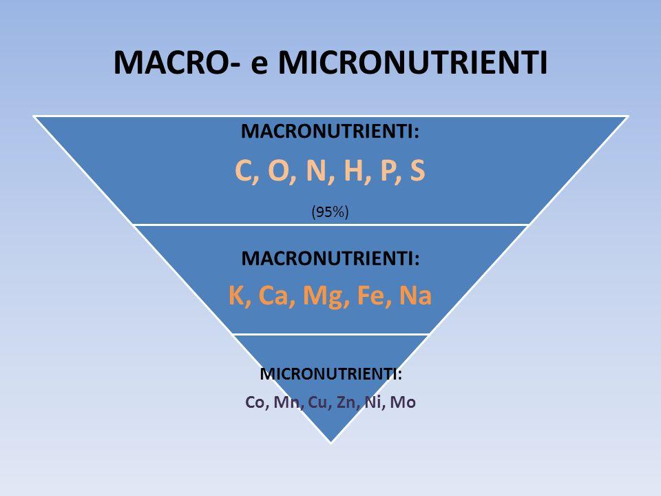 Classificazione dei microrganismi in base alle fonti di energia e C utilizzate CATEGORIE NUTRIZIONALIFOTOTROFI LUCE ATPCHEMIOTROFI COMPOSTI CHIMICI ATP Sub-categorienutrizionali FOTOAUTOTRO FI (FOTOLITOTRO FI) FOTOETEROTR OFI (FOTOORGANOT ROFI) CHEMIOETEROTR OFI (CHEMIORGANOTR OFI ) CHEMIOAUTOTR OFI (CHEMIOLITOTR OFI) Fonte di Carbonio Anidride Carbonica C organico Anidride Carbonica Fonte di Energia Luce Ossidaz.
