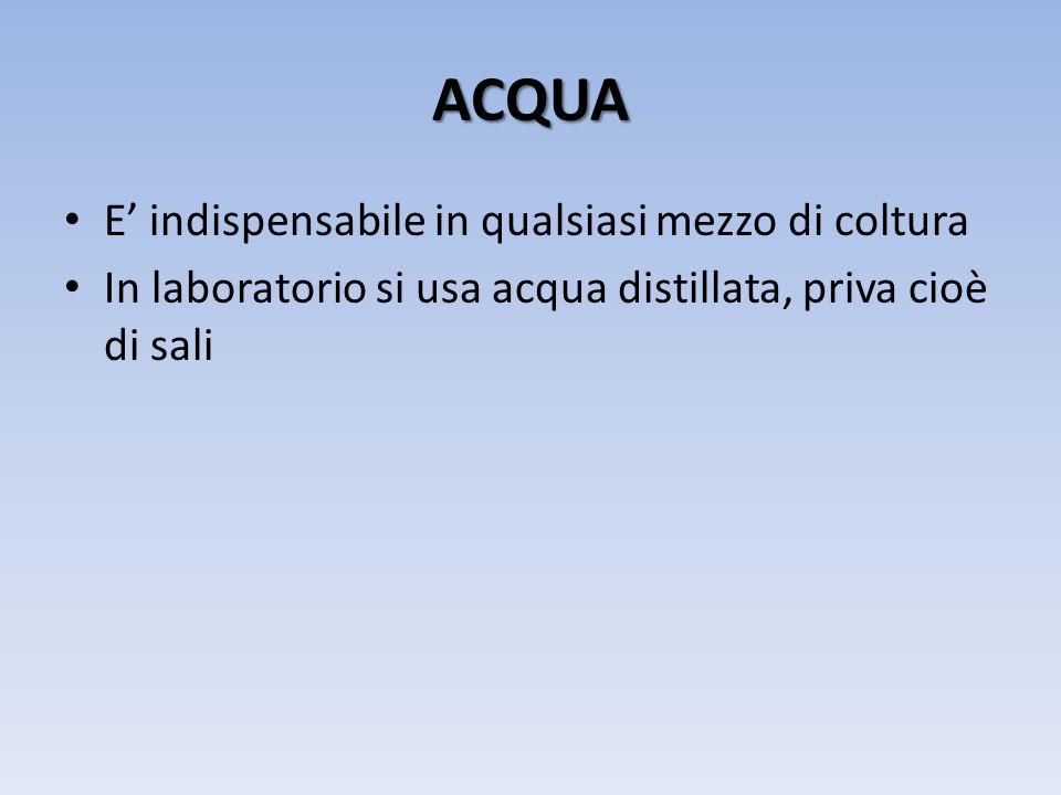 ACQUA E indispensabile in qualsiasi mezzo di coltura In laboratorio si usa acqua distillata, priva cioè di sali