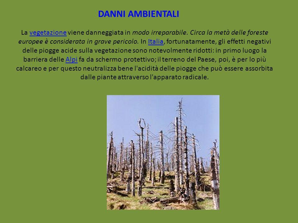 La vegetazione viene danneggiata in modo irreparabile. Circa la metà delle foreste europee è considerata in grave pericolo. In Italia, fortunatamente,