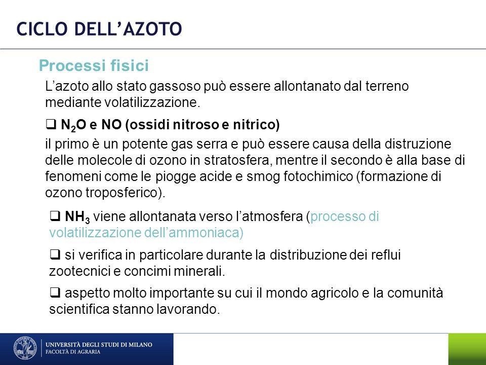 CICLO DELLAZOTO Processi fisici NH 3 viene allontanata verso latmosfera (processo di volatilizzazione dellammoniaca) aspetto molto importante su cui i