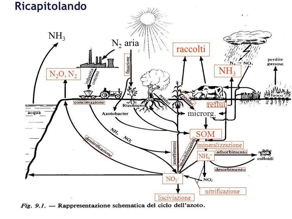 NH 3 N 2 aria raccolti N 2 O, N 2 NH 3 SOM microrg. mineralizzazione NH 4 + nitrificazione lisciviazione NO 3 - reflui Ricapitolando