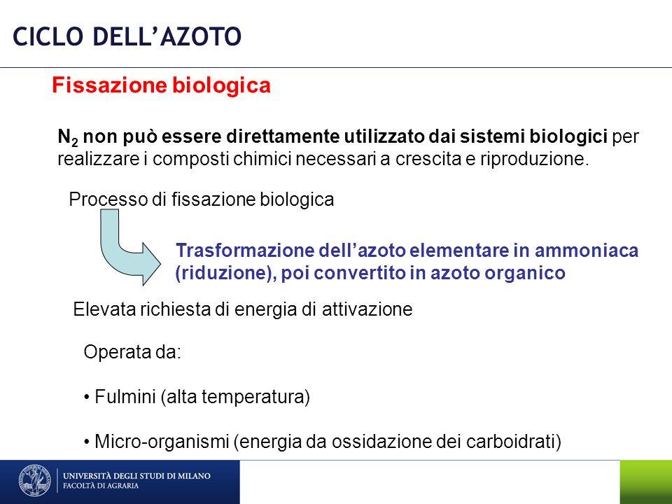 CICLO DELLAZOTO N 2 non può essere direttamente utilizzato dai sistemi biologici per realizzare i composti chimici necessari a crescita e riproduzione