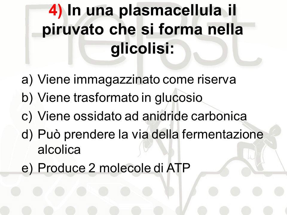 4) In una plasmacellula il piruvato che si forma nella glicolisi: a)Viene immagazzinato come riserva b)Viene trasformato in glucosio c)Viene ossidato