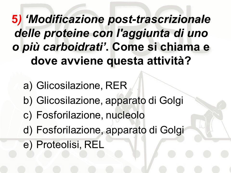 5) Modificazione post-trascrizionale delle proteine con l'aggiunta di uno o più carboidrati. Come si chiama e dove avviene questa attività? a)Glicosil