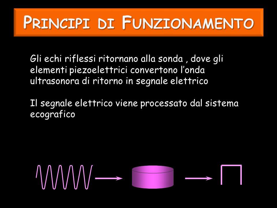 Gli echi riflessi ritornano alla sonda, dove gli elementi piezoelettrici convertono londa ultrasonora di ritorno in segnale elettrico Il segnale elettrico viene processato dal sistema ecografico