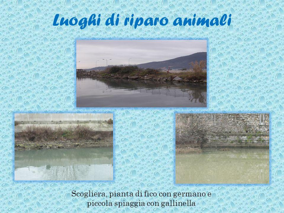 Luoghi di riparo animali Scogliera, pianta di fico con germano e piccola spiaggia con gallinella