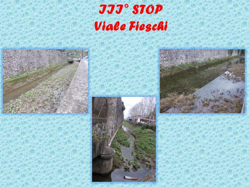 III° STOP Viale Fieschi