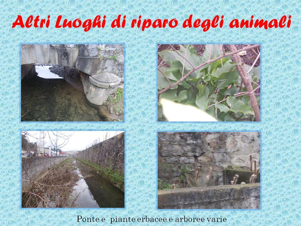Altri Luoghi di riparo degli animali Ponte e piante erbacee e arboree varie