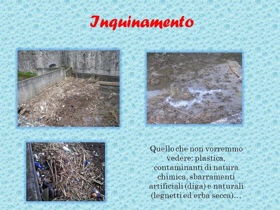 Inquinamento Quello che non vorremmo vedere: plastica, contaminanti di natura chimica, sbarramenti artificiali (diga) e naturali (legnetti ed erba sec