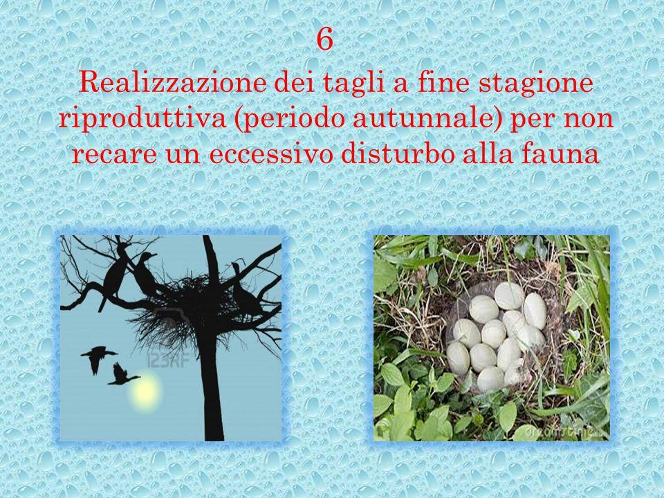 Realizzazione dei tagli a fine stagione riproduttiva (periodo autunnale) per non recare un eccessivo disturbo alla fauna 6