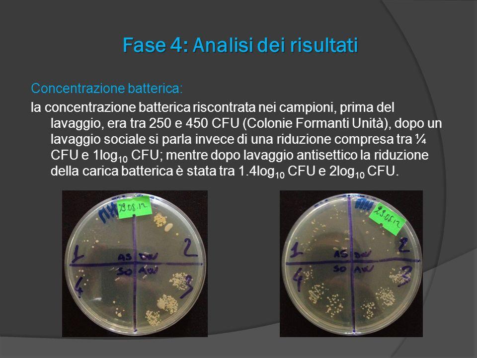 Fase 4: Analisi dei risultati Concentrazione batterica: la concentrazione batterica riscontrata nei campioni, prima del lavaggio, era tra 250 e 450 CF