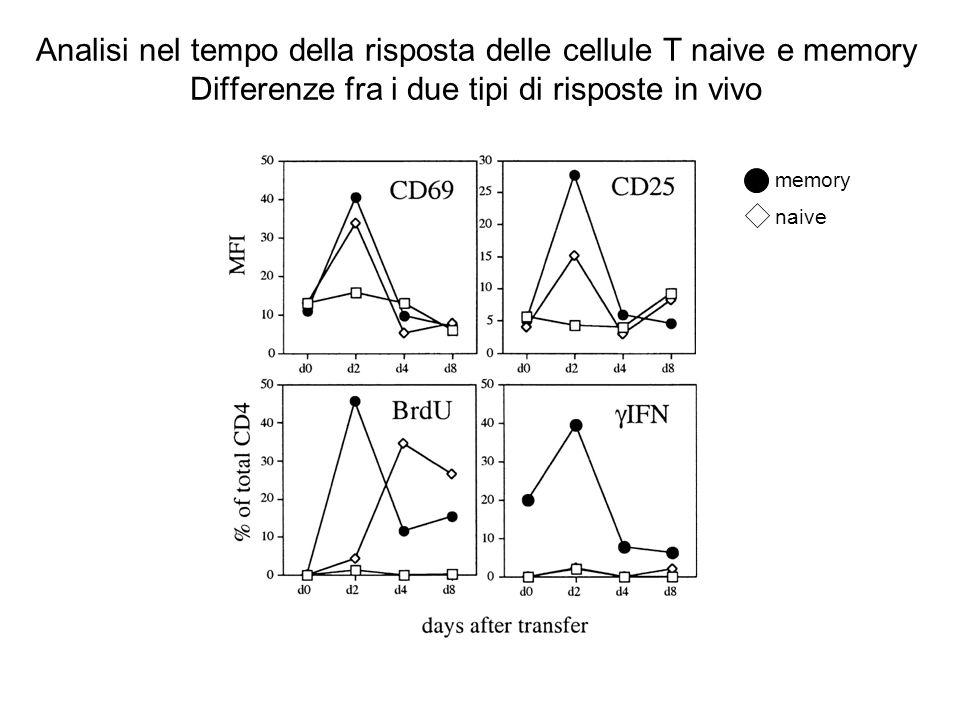 Analisi nel tempo della risposta delle cellule T naive e memory Differenze fra i due tipi di risposte in vivo memory naive