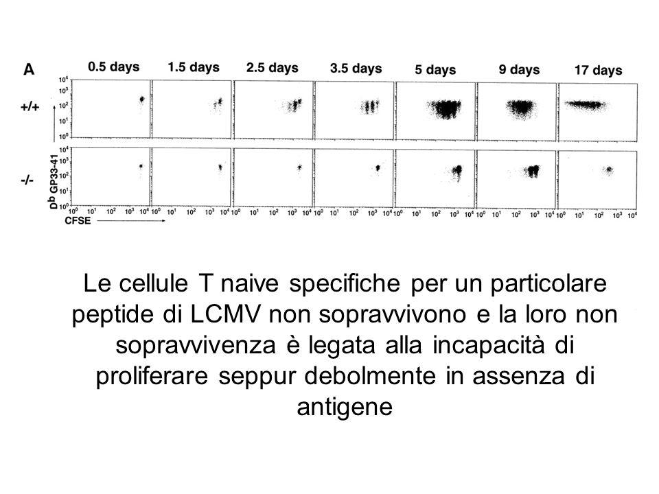 Le cellule T naive specifiche per un particolare peptide di LCMV non sopravvivono e la loro non sopravvivenza è legata alla incapacità di proliferare
