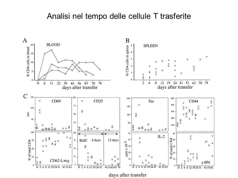 Numero di cellule T CD4 + V 6 + negli organi linfoidi periferici dei diversi topi recipienti