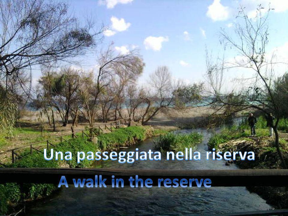 Una passeggiata nella riserva...