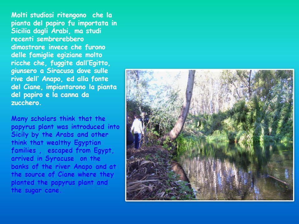 Molti studiosi ritengono che la pianta del papiro fu importata in Sicilia dagli Arabi, ma studi recenti sembrerebbero dimostrare invece che furono del