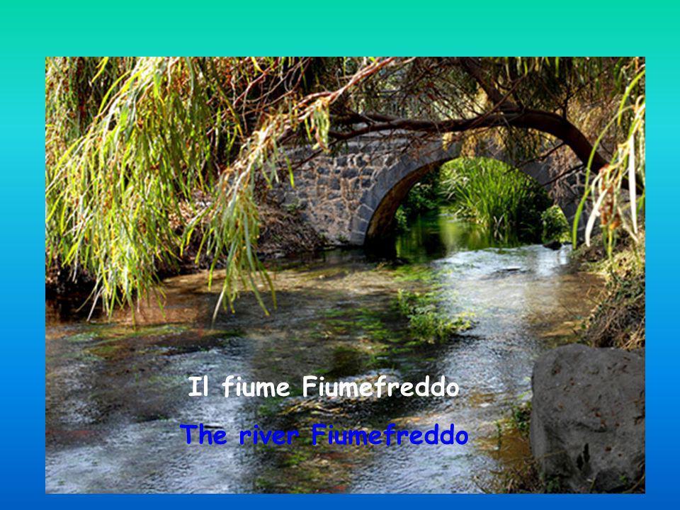 La riserva del fiume Fiumefreddo Il fiume Fiumefreddo The river Fiumefreddo